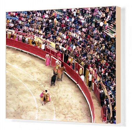 A colour image of Paraguayan bullfighting. Three matadors are on the field with a bull, one rides a horse and spectators look on. Two of the matadors hold their decorated pink capes out in order to attract the bulls attention