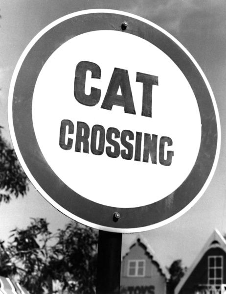 "A black and white image of a cat crossing sign. The circular sign is has the words ""Cat Crossing"" written in large font and can be seen in the program ""Hector and Milly Save Uncle Tom&quot"
