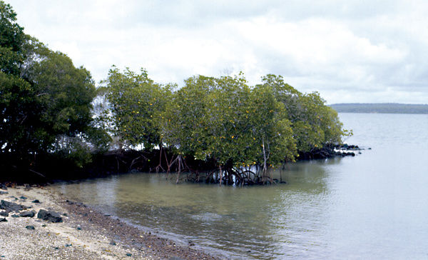 A colour image of a small beach setting with a shoreline of mangroves. The program look at the life and work of national park rangers in the Northern Territory, and the unique environment that they help protect