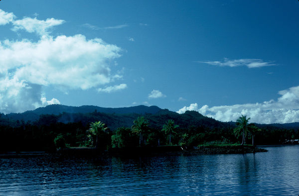 A colour image of a shoreline lined with palm trees. The water runs right up to the trees. There is also a small mountain range in the background