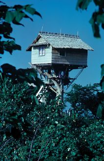 Cabin in the treetops. Solomon Islands, 1979.