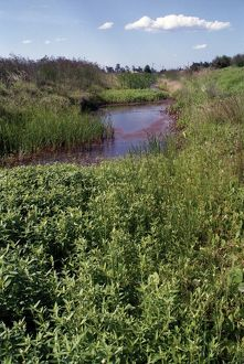 A river running through grasslands. Waterplants in Australia,1990