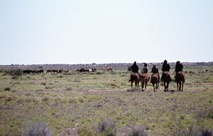 Five stockmen on horseback stand watching a mob of horses.