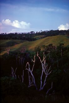 Trees on a hill. Solomon Islands, 1979.