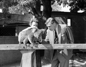 A woman and man stroke a koala perched on an enclosure's fence.