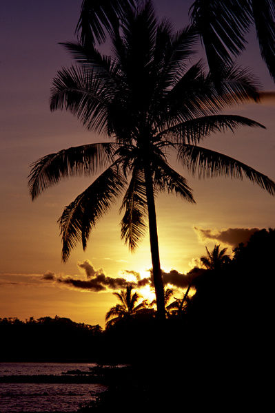 A colour image of a large palm tree with a setting sun behind it, creating a silhouette image. There is a small rocky area towards the background of the image