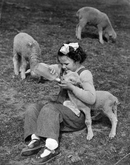 Close up of a young girl feeding a lamb with a baby's bottle