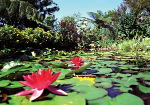 Waterplants in Australia