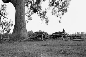 Old wagon under a tree. Outlook: Bullocky, 1969